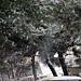 Фотогалерея Геленджика Геленджик,<br>Белый&nbsp;альбом Фото № 73